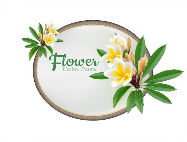 Stile reale di vettore dell'illustrazione di plumeria del fiore