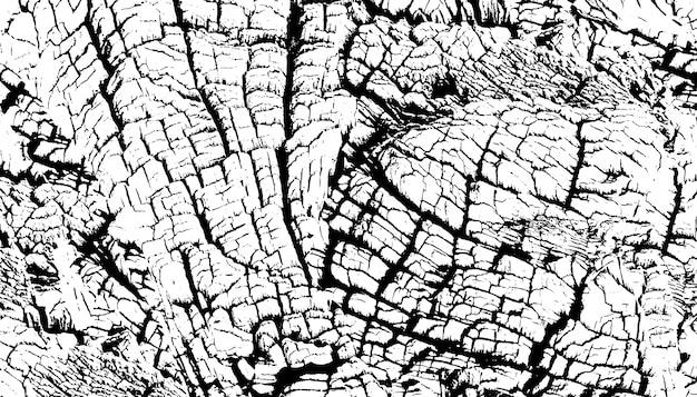 Struttura afflitta della sovrapposizione di superficie ruvida, vecchio ceppo di albero, anelli sull'albero.
