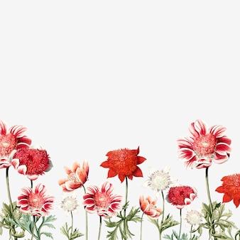 Struttura del fiore anemone rosso e bianco disegnato a mano