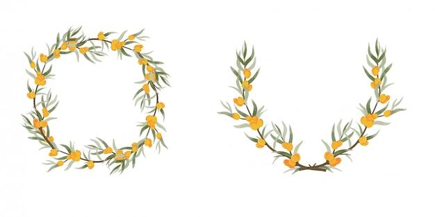 Struttura di vettore dell'olivello spinoso