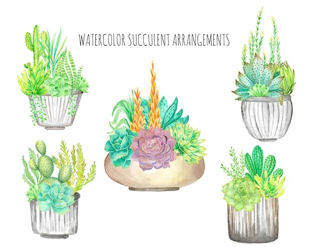 Succulenta dell'acquerello
