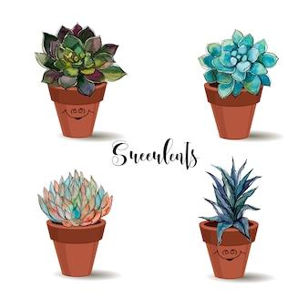 Succulente in vasi di terracotta