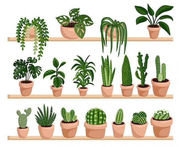 Succulente in vaso e piante di cactus sugli scaffali in una cartolina di fila