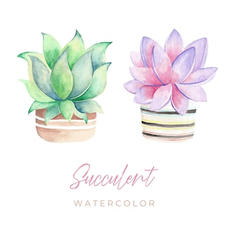 Succulente su vaso acquerello