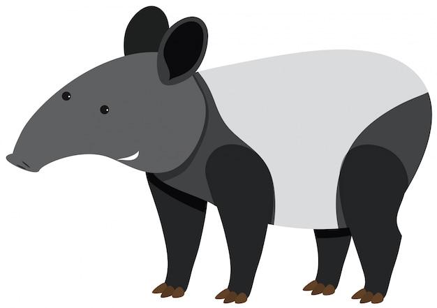 Tapiro carino in piedi su sfondo bianco