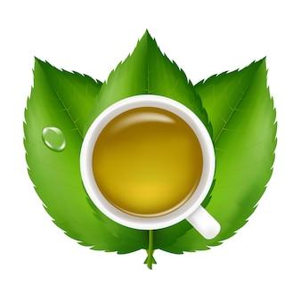 Tè verde con foglie verdi fresche, su sfondo bianco, illustrazione