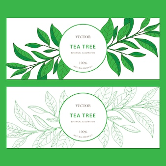 Tea tree. insieme delle insegne orizzontali disegnate a mano di web di vettore con le erbe isolate su fondo bianco