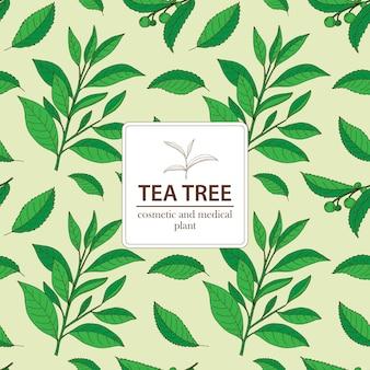 Tea tree. reticolo senza giunte dell'annata disegnato a mano di vettore