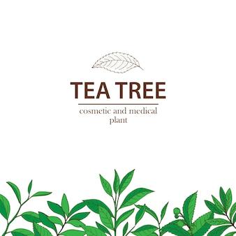 Tea tree. vettore disegnato a mano a base di erbe