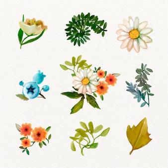 Tema della collezione di fiori primaverili dell'acquerello