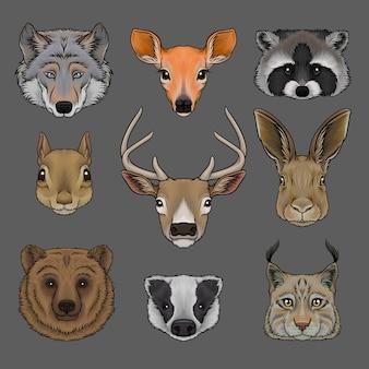 Testa di animali selvatici, ritratto di lupo, daina, procione, scoiattolo, cervo, lepre, orso, tasso e lince disegnati a mano illustrazioni