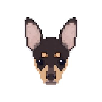 Testa di chihuahua in stile pixel art.