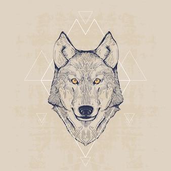 Testa di lupo, illustrazione disegnata a mano dell'annata