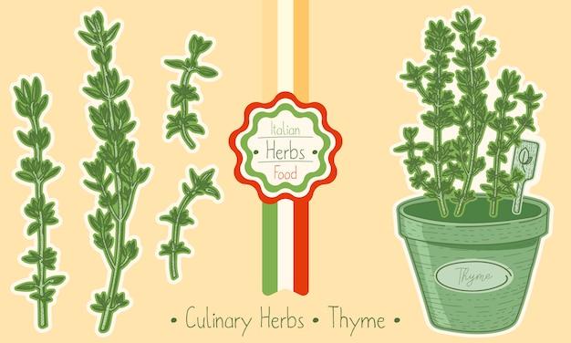 Timo di erbe alimentari e culinarie