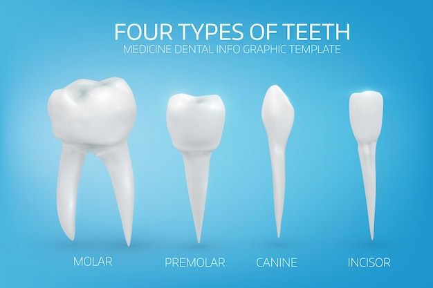 Tipi di denti umani su sfondo blu