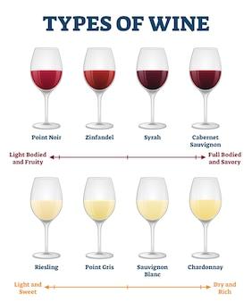 Tipi di illustrazione del vino. spiegazione etichettata della bevanda rossa e bianca.