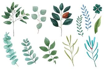 Tipi differenti di foglie illustrate della pianta isolate su fondo bianco.