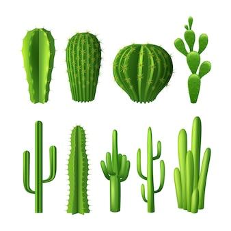 Tipi differenti di icone decorative realistiche delle piante del cactus messe