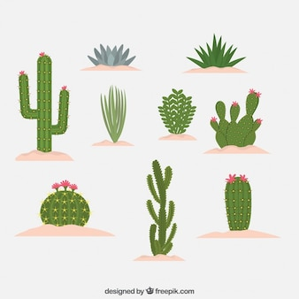 Tipo differenti di disegno cactus