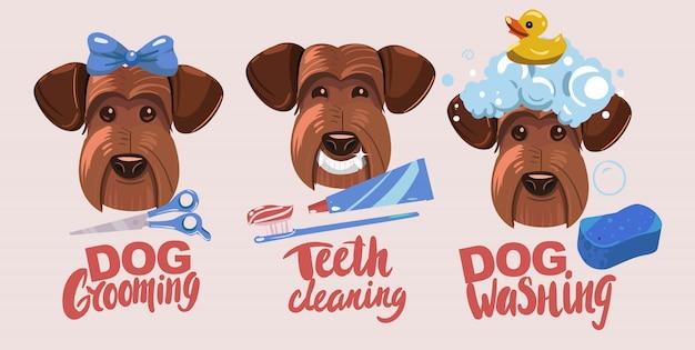 Toelettatura per cani. denti che si schiariscono, lavaggio del cane.