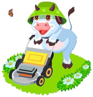 Toro della mucca che falcia il prato inglese dell'erba. simbolo animale divertente