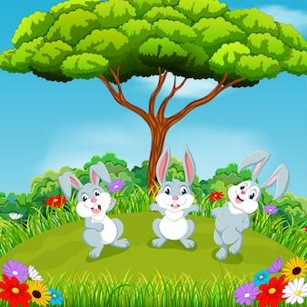 Tre conigli con uno splendido scenario