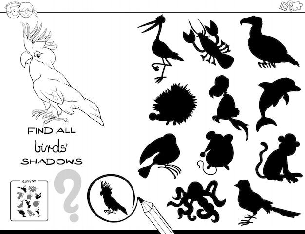 Trovare tutte le ombre degli uccelli attività per i bambini