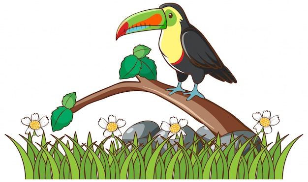 Tucano isolato sul ramo