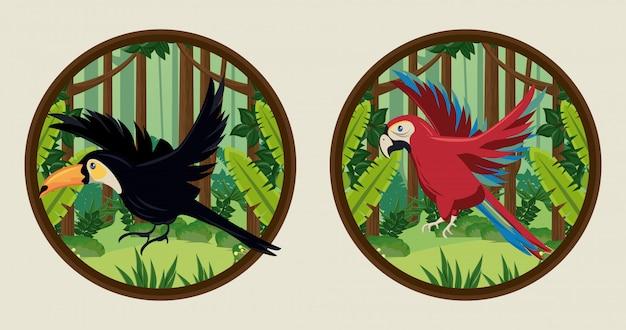 Tucano selvatico e uccelli pappagallo in cornici circolari