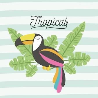 Tucano uccello tropicale con foglie