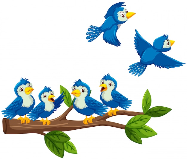 Uccelli blu sul ramo su fondo bianco