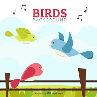 Uccelli colorati in uno sfondo paesaggio