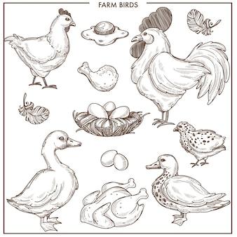 Uccelli di fattoria con un piccolo nido e uova fresche