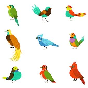 Uccelli esotici dalla foresta pluviale giungla collezione di animali colorati tra cui specie di uccelli del paradiso e pappagalli
