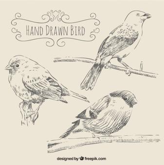 Uccelli in stile disegnato a mano