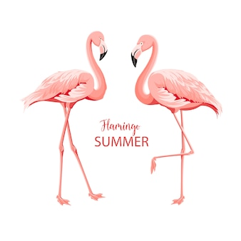 Uccelli rosa tropicali.