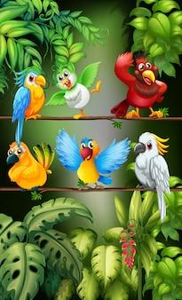 Uccelli selvatici che si levano in piedi sul ramo