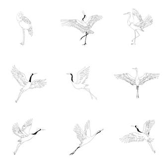 Uccelli selvatici in volo. animali in natura o in cielo. gru o grus e cicogna o shaduf e ciconia con le ali