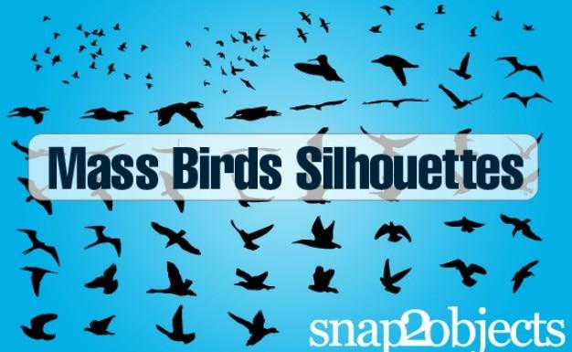 Uccelli vettoriali gratis
