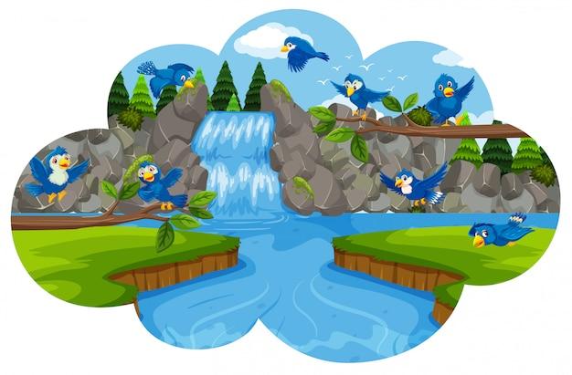 Uccello alla cascata