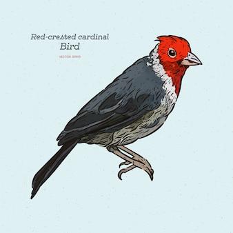 Uccello cardinale dalla cresta rossa.