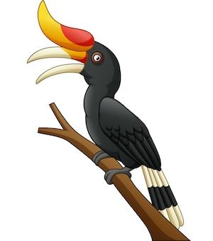 Uccello del bucero del fumetto isolato su fondo bianco
