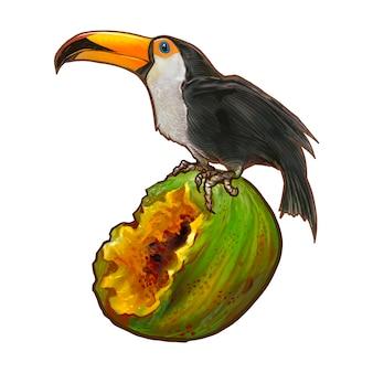 Uccello del bucero su un'illustrazione della noce di cocco