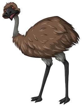 Uccello emu con piuma marrone