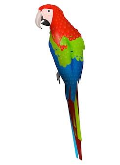 Uccello pappagallo detalizzato su sfondo bianco, in stile cartone animato moderno