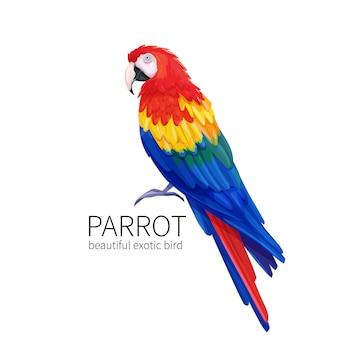 Uccello pappagallo