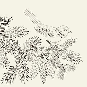 Uccello su pino abete con pigna