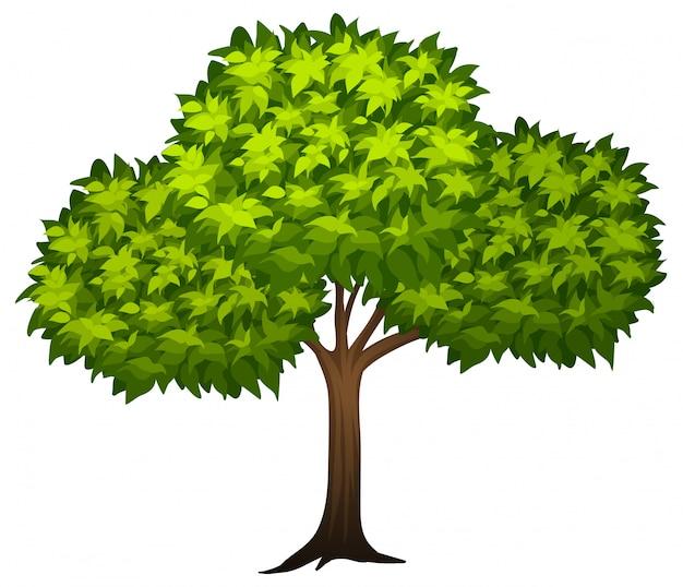 Un albero verde