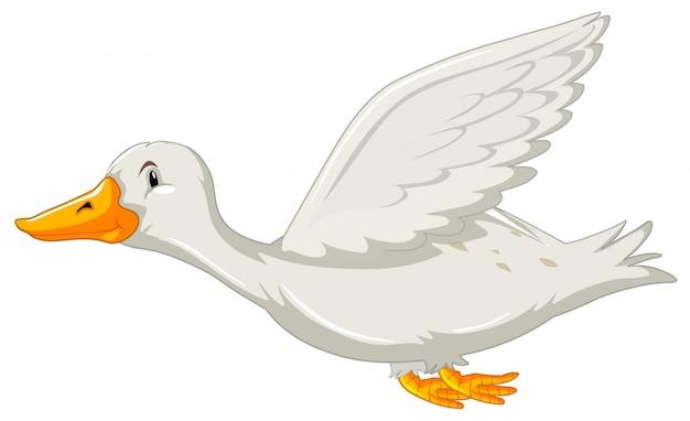 Un'anatra volante su backgrounf bianco