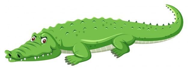 Un coccodrillo verde su sfondo bianco